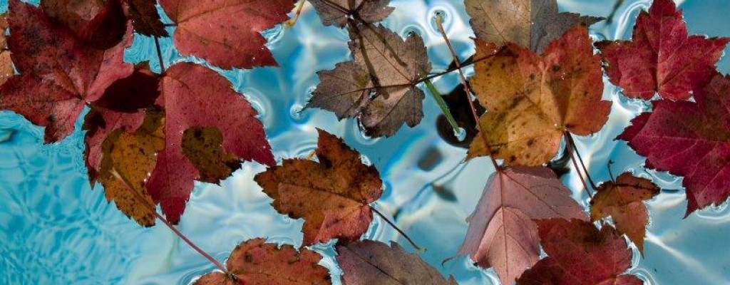 fall pool maintenance tips